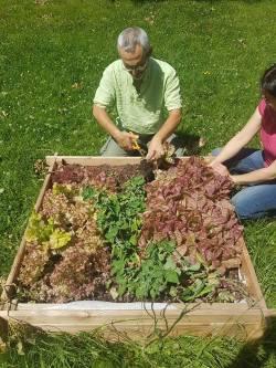 Récolte-sur-le-jardin-partagé-de-Bel-Air