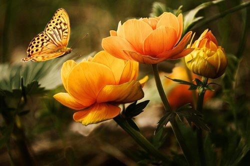 Biodiversité au jardin écologique