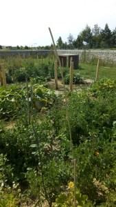 Jardin partagé des enfants, Bussy St Georges