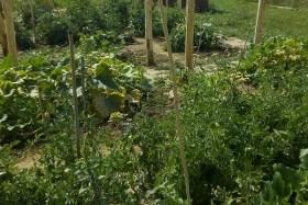 Le jardin partagé des enfants