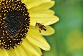 Accueillir la biodiversité