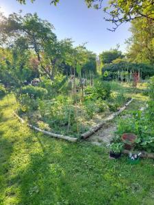 Permaculture : le jardin oasis