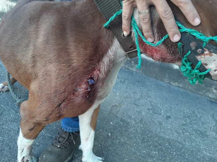 Un perro fue atacado por los ladrones 2 13 agosto, 2020