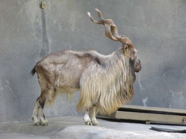Animales en extincion 17 1