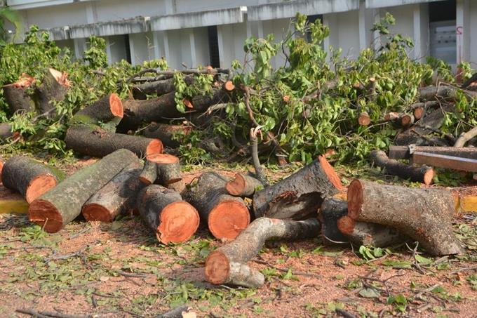 La importancia de los árboles en las ciudades