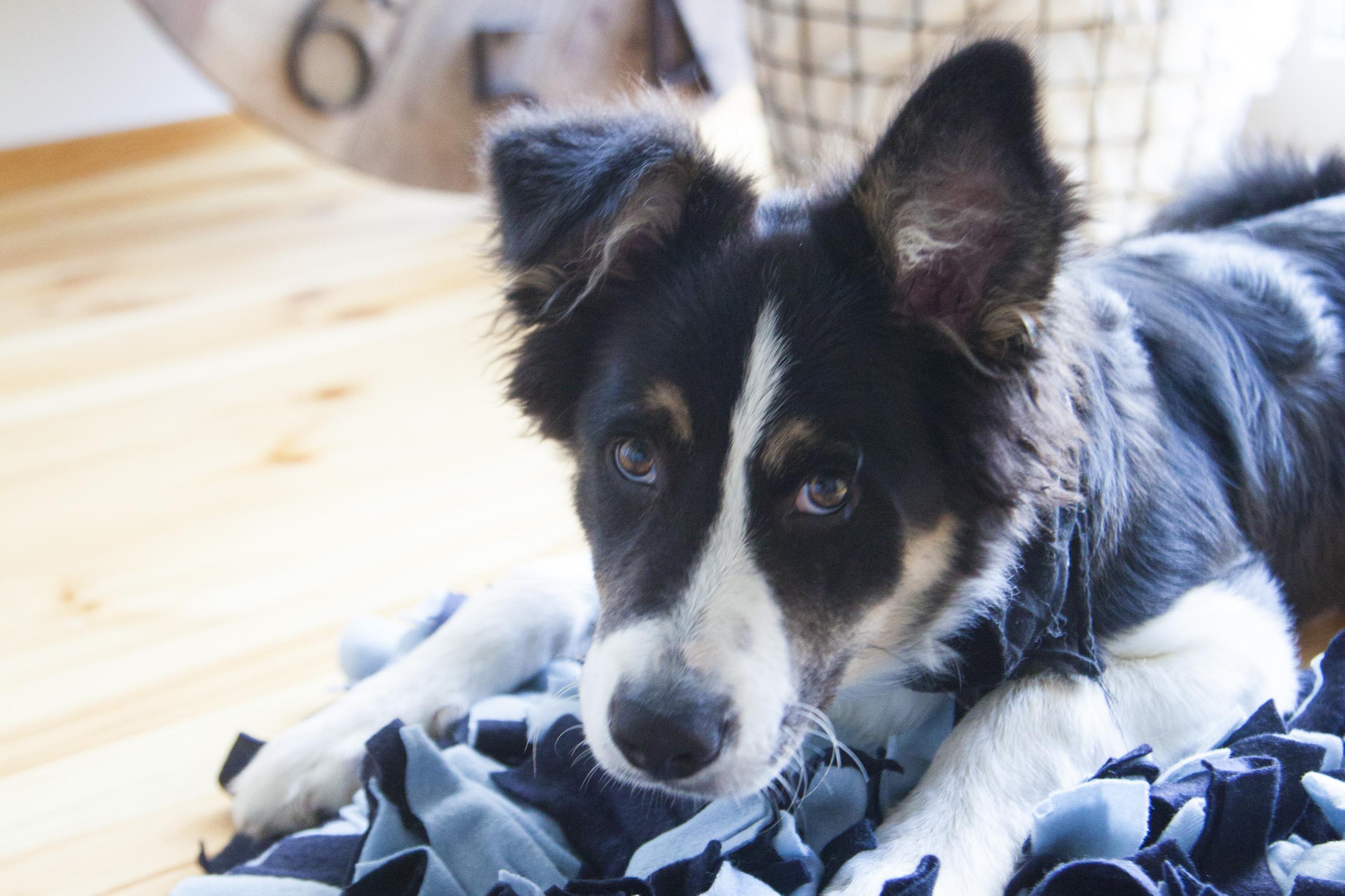 Jak zrobić matę węchową dla psa – DIY