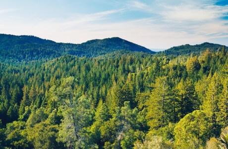 photodune-2263438-forest-m