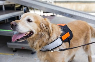 Service Animals in the Workplace: Questions and Answers