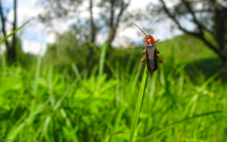 Surface Insect Control, Surface Insect Control, Lawn Care Service Minneapolis