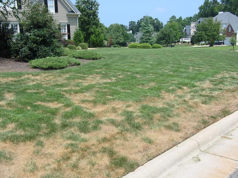 Lawn Disease, Lawn Disease Control, Lawn Care Service Minneapolis