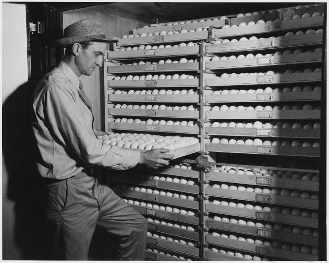 newberry_county_south_carolina-_view_of_interior_of_one_of_the_incubating_compartments-_this_is_a_-_-_-_-_nara_-_522750