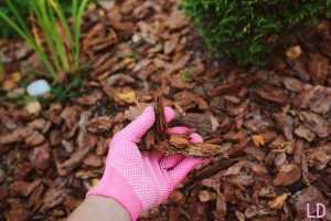 best mulch for indoor plants