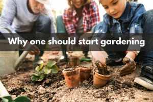 Why one should start gardening