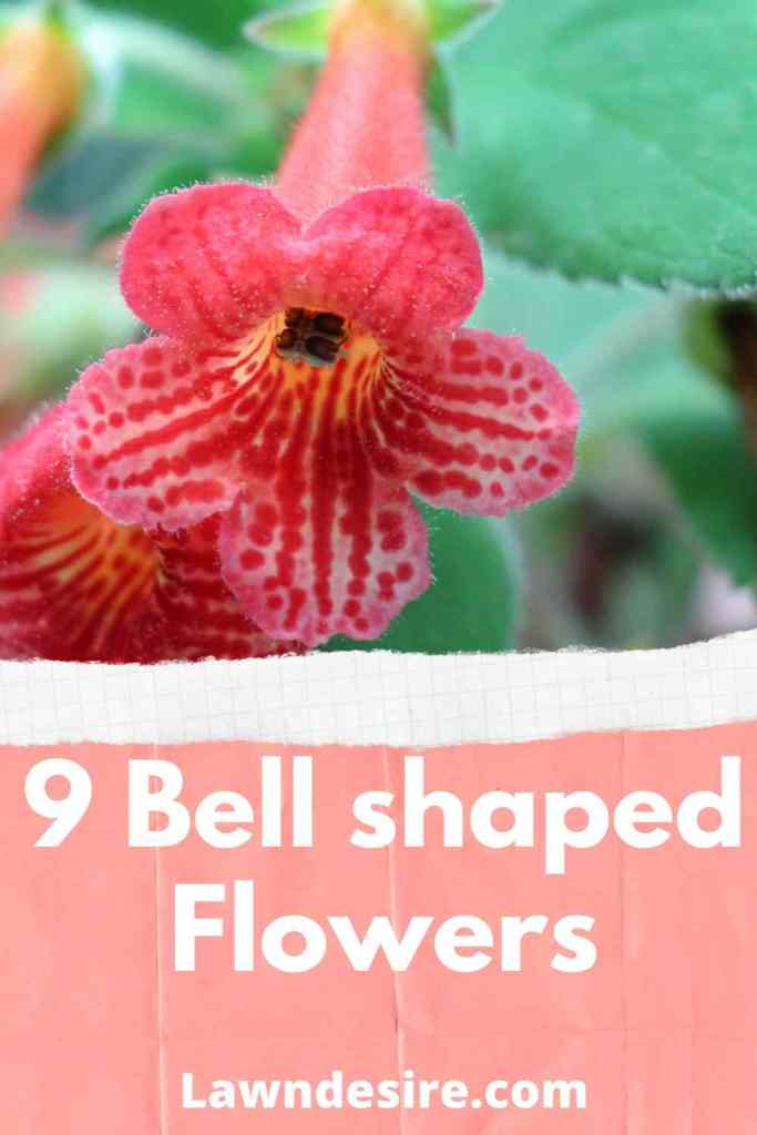 6-Bell-Shaped-Flowers