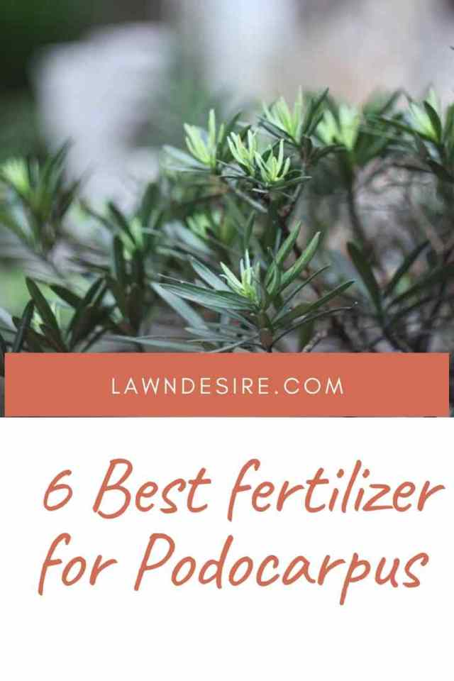 fertilizer-for-podocarpus
