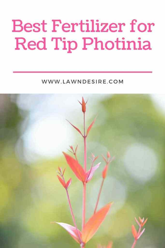 Fertilizer-for-Red-Tip-Photinia