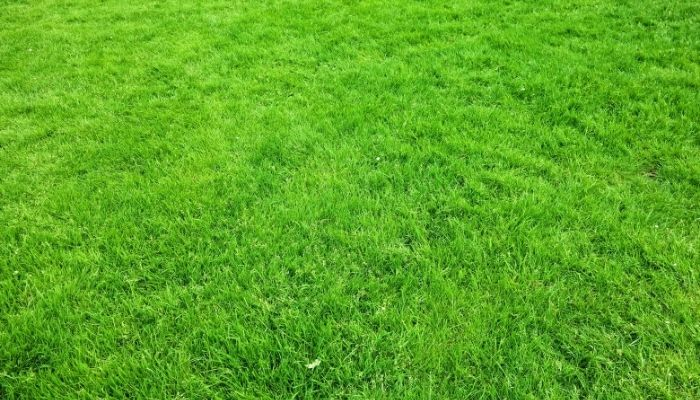 How Long Should You Not Walk on Grass