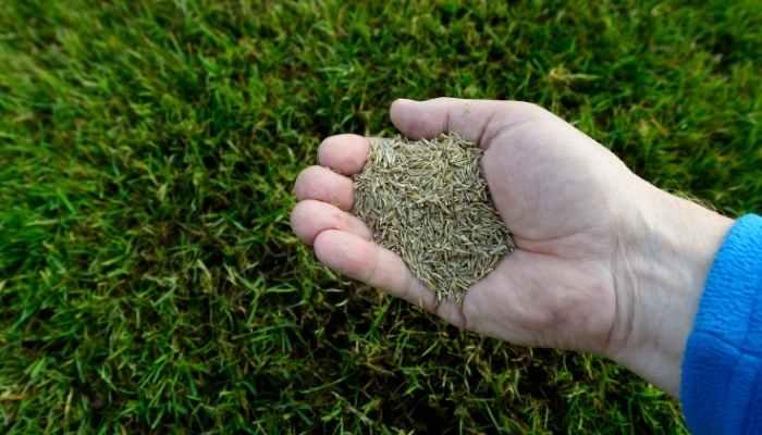 Best Grass Seed for Minnesota