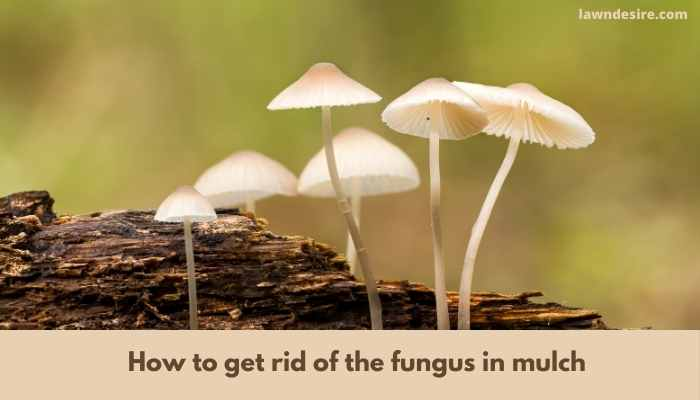 How to Get Rid of Fungus in Mulch