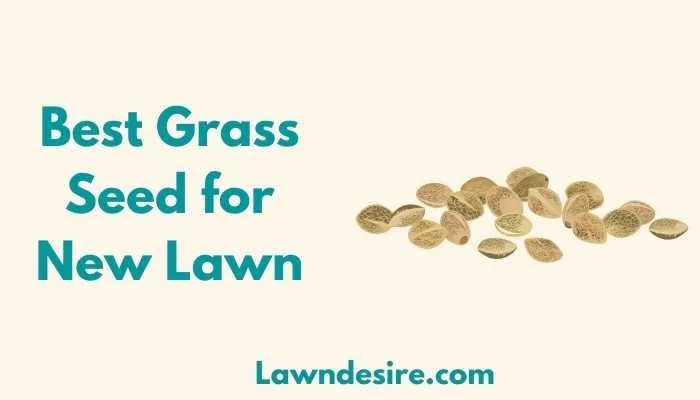 Best Grass Seed for New Lawn