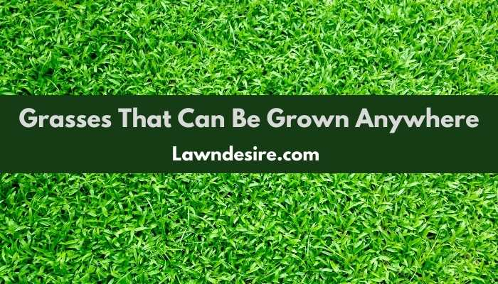 Grasses That Can Be Grown Anywhere