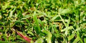 Get Rid of Bermuda Grass in Flower Beds