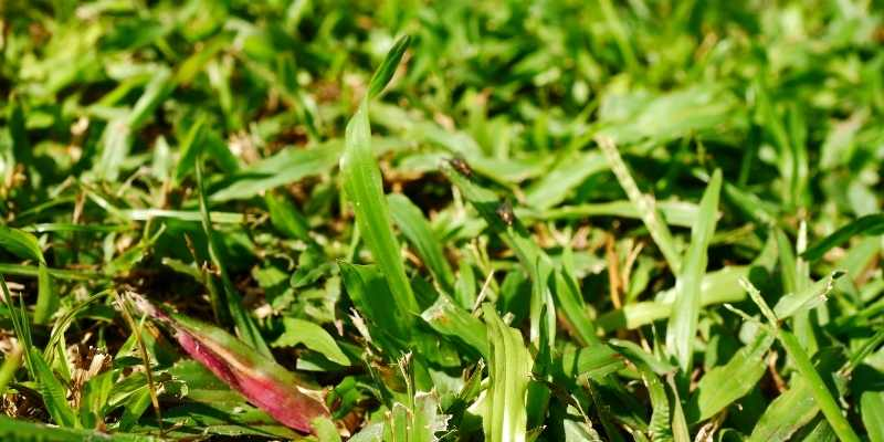 Get Rid of Bermuda Grass in Flower Beds
