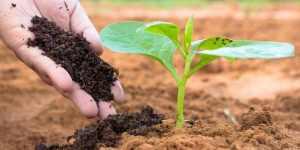 Does Fertilizer Expire