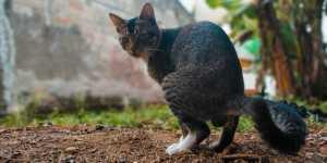 Is Cat Poop Good Fertilizer for Flowers
