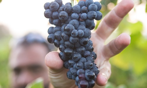 Succession Planning for Wineries and Vineyards