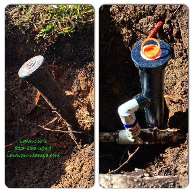 "Changing sprinkler heads from 4"" to 6"""