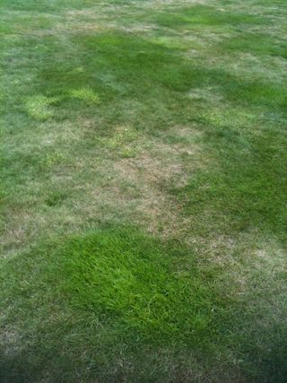 Dry Patches on Lawns