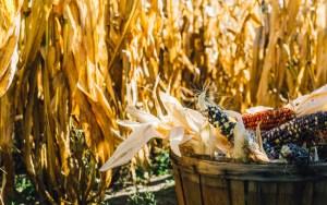 PLA-Plastic-Corn