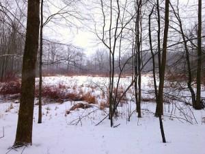 Quiet winter scene