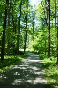 A shady stretch of the Lansing River Trail