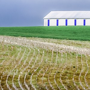 Kentucky Horse Barn, Photography, 29 x 17 matted and framed, $400
