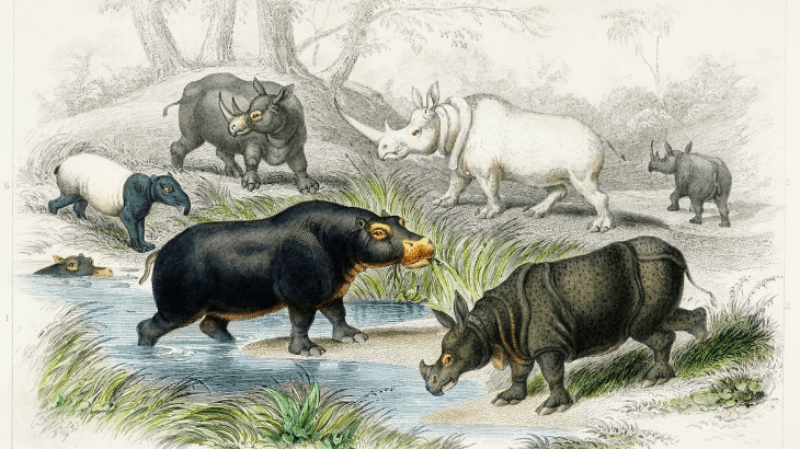 image of a group of animals