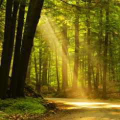 Law and Taxation: See the Forest and the Trees