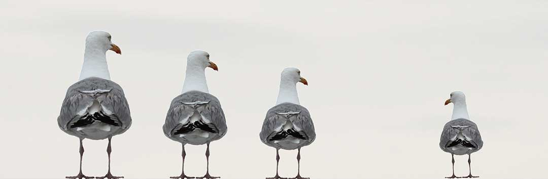 A group of seagulls excluding one member to signify disinheritance.