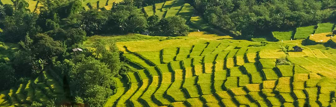Farm fields to denote the land sold by the wife to pay off her debts.
