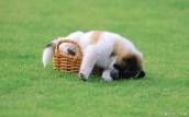 free-animal-lovely-dog-baby_278455