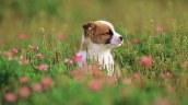 Garden_adventure_of_the_little_puppy_photos_pictures_puppy_MIL56006