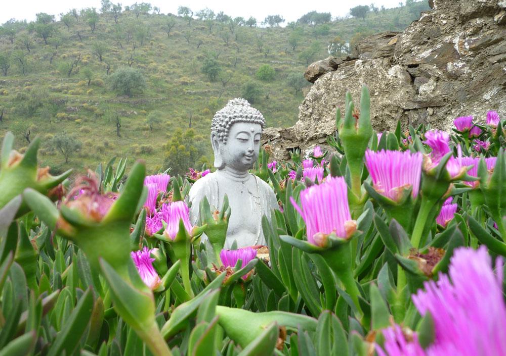 Mach's wie Buddha!