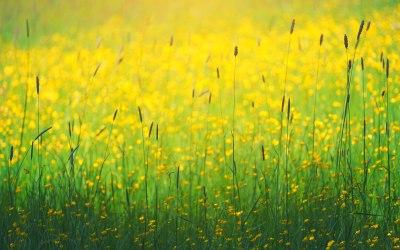 Natural Chakra Balancing: Die Natur als Heiler