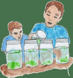 Algae and Pollution