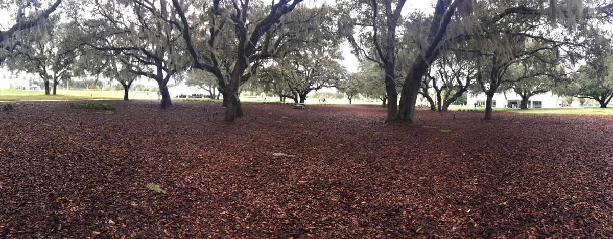 The Oak Grove is an open space with lots of greenery