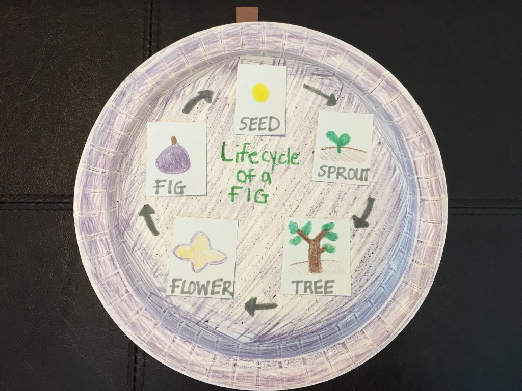 Paper Plate Fruit Life Cycles