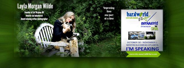 Cat Wisdom 101-Fb banner