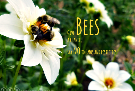 bees-dahlias-quote