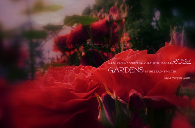 rose-garden-winter-quote